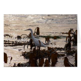 Tide Pools White Egret Card