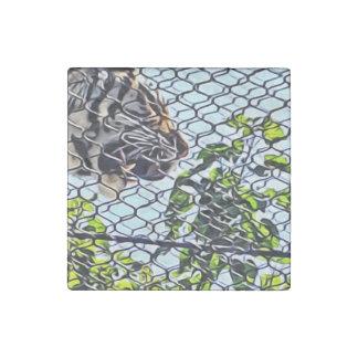 Tigar walking roaring through walkway stone magnets