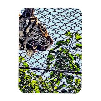Tigar walking roaring through walkway rectangular photo magnet