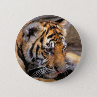Tiger38 2 Inch Round Button