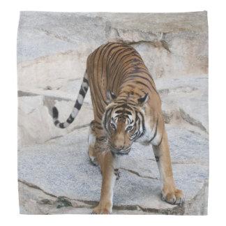Tiger 1216 AJ Bandana