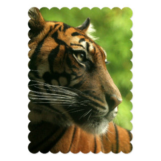 tiger-138.jpg carton d'invitation  12,7 cm x 17,78 cm