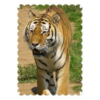 tiger-44 carton d'invitation  12,7 cm x 17,78 cm