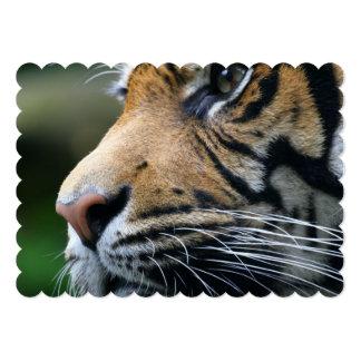 tiger-45 carton d'invitation  12,7 cm x 17,78 cm