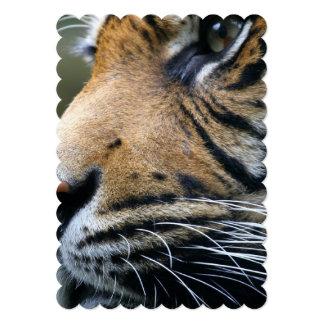 tiger-45