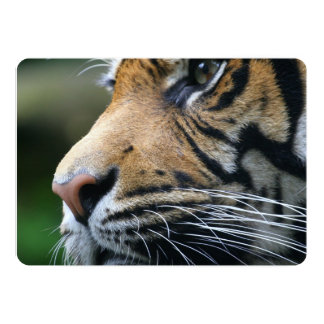 tiger-45 faire-parts