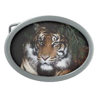 Tiger 4 Belt Buckle