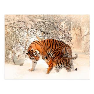Tiger and cub - tiger postcard