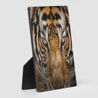 Tiger Animal Print Plaque
