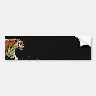 Tiger Approaching - Wild Animal Artwork Bumper Sticker