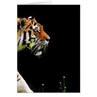 Tiger Approaching - Wild Animal Artwork Card