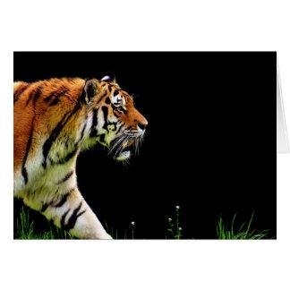 Tiger Approaching - Wild Animal Artwork Card