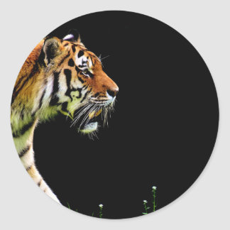 Tiger Approaching - Wild Animal Artwork Classic Round Sticker