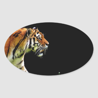Tiger Approaching - Wild Animal Artwork Oval Sticker