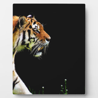 Tiger Approaching - Wild Animal Artwork Plaque