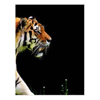Tiger Approaching - Wild Animal Artwork Postcard
