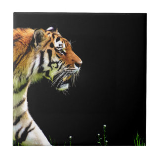 Tiger Approaching - Wild Animal Artwork Tile