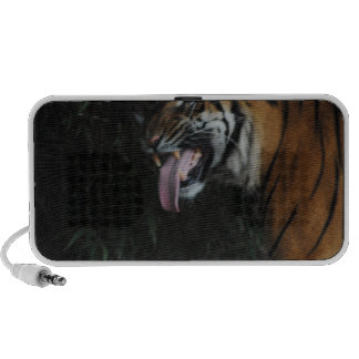Tiger at the Zoo Mp3 Speaker