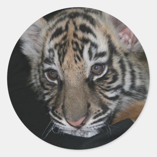 Tiger Baby Classic Round Sticker
