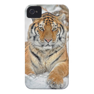 Tiger Beauty in Snow iPhone 4 Cases