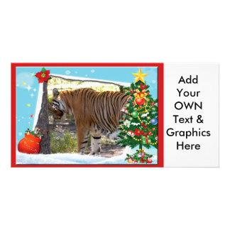 Tiger Bengali-c-2 copy Photo Cards