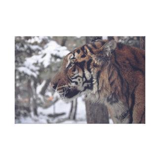 Tiger Canvas Wall Print
