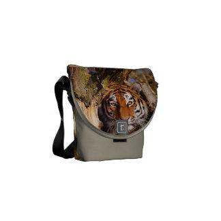 Tiger Cat Animal Stripes Pattern Destiny Destiny's Courier Bags