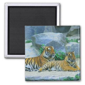 Tiger Cat Animal Stripes Pattern Destiny's Destiny Magnet