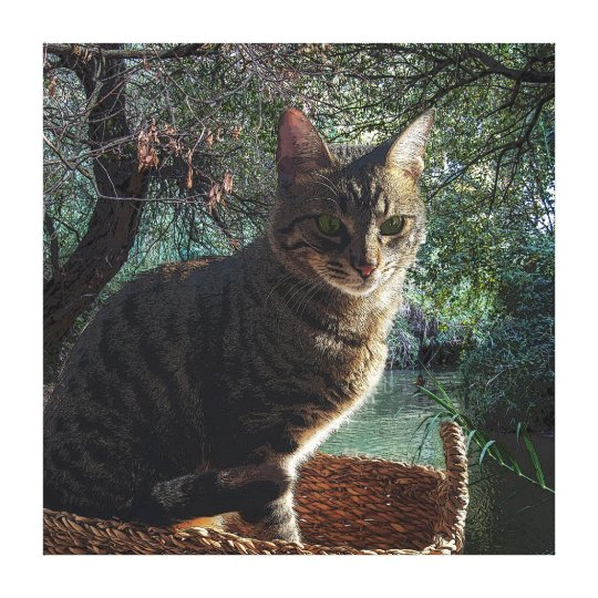 Tiger Cat In Basket Swimming In Mountain River Canvas Print