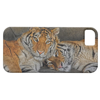 Tiger Cave iPhone 5 Case
