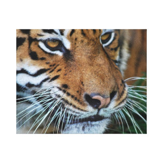 Tiger close up canvas print