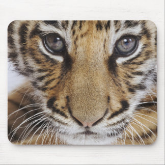 Tiger Cub (2 Month Old) Mouse Pad