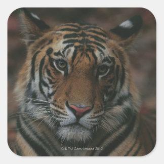 Tiger Cub Square Sticker