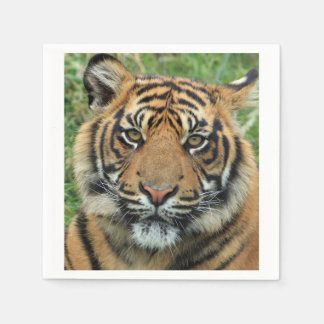 Tiger Disposable Napkins