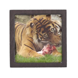 Tiger Eating His Meat Real Photo Premium Gift Boxes