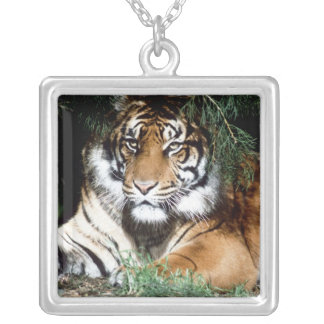 Tiger Enjoying Shade Silver Plated Necklace