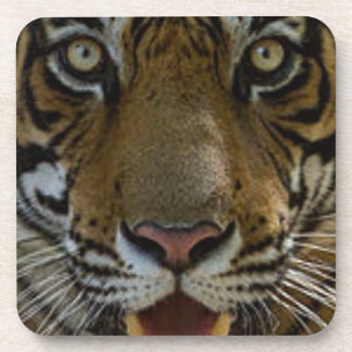 Tiger Face Close Up Coaster