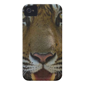 Tiger Face Close Up iPhone 4 Case