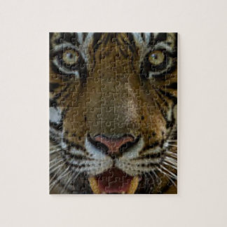 Tiger Face Close Up Jigsaw Puzzle