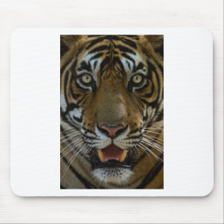Tiger Face Close Up Mouse Pad