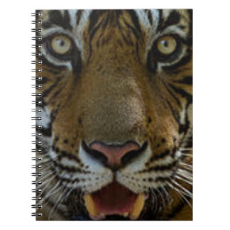 Tiger Face Close Up Note Book