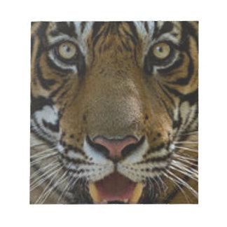 Tiger Face Close Up Notepads