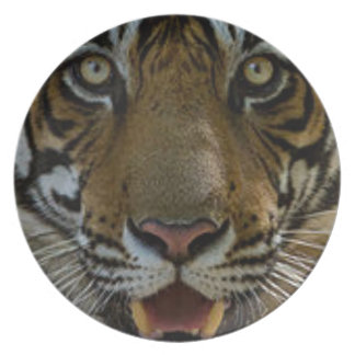 Tiger Face Close Up Plate