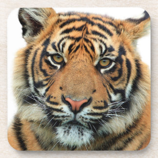 Tiger Face Coaster