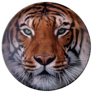 Tiger Face Eyes Stunning Big Cat Porcelain Plates