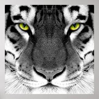Tiger face - white tiger - eyes tiger - tiger poster