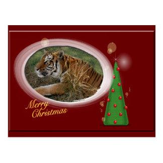 Tiger Flavio-c-104 copy Postcard