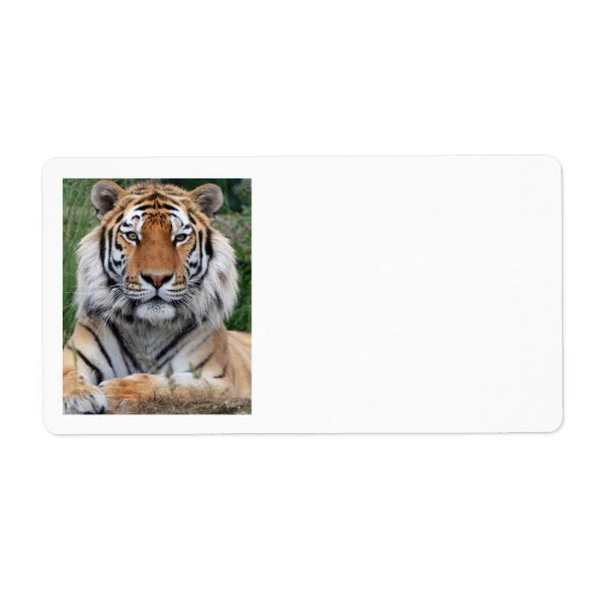 Tiger head beautiful photo portrait address labels