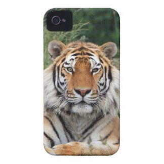Tiger head male beautiful photo iphone 4 case mate