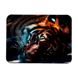 Tiger In Repose Magnet
